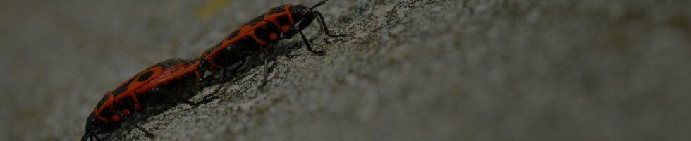 bedbug_slider